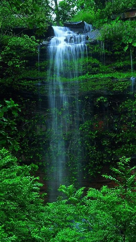 nature forest waterfall iphone  wallpaper iphone