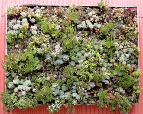 Vertical Garden Succulent Wall Panels Cool Diy Green Living Wall Projects For Your Home