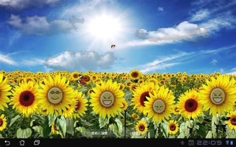 Android Live Wallpaper: Sunflowers