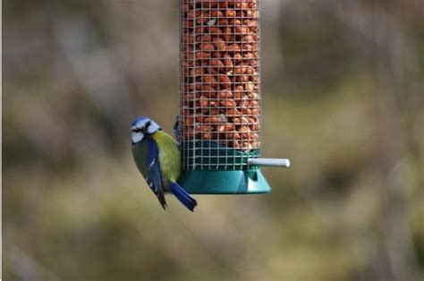 how to attract birds to your garden discover wildlife