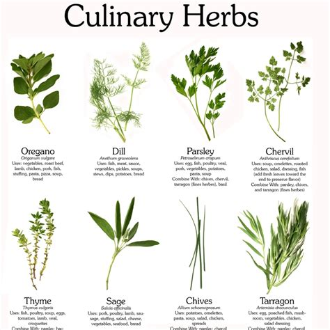 identification of herbs wildr identify fresh herbs www imgkid com the image kid has it