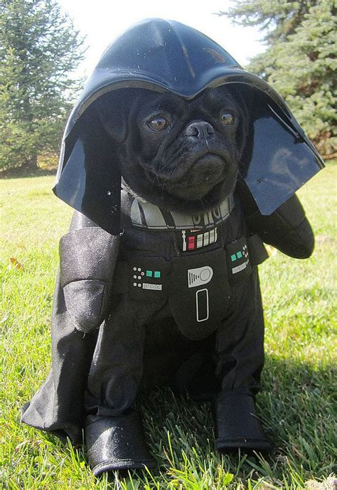 black pugs in costumes darth vader darth vader black pug and pet costumes