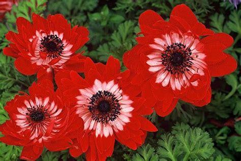 imagenes flores raras plantas naturais flores raras