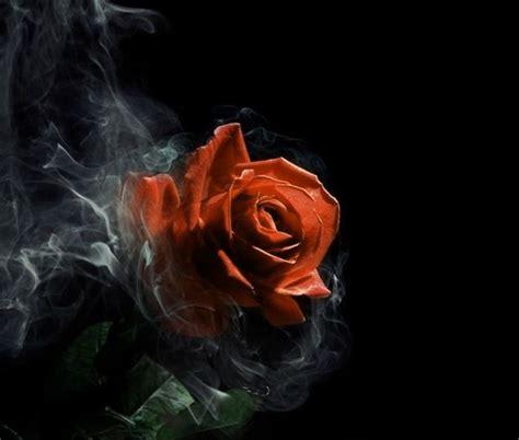 imagenes goticas para descargar imagenes de rosas goticas en postales para obsequiar