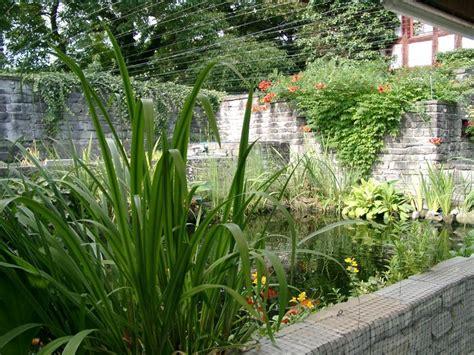 Pflanzen F R Teich 769 by Pflanzen Um Den Teich Der Generalverj Ngte Teich