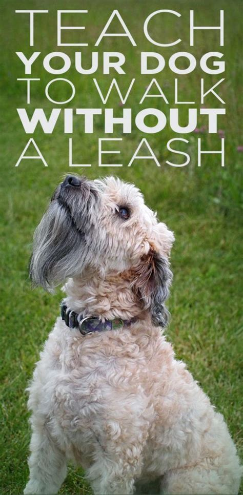 out on a leash how terryã s gave me new books 1000 ideas about pet care on care pet