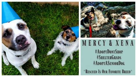 mercy puppy rescue rescue stories mercy and xena are both foster fails positively woof