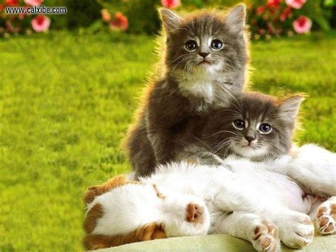 kittens and puppies puppies and kittens wallpapers wallpaper cave
