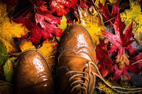 foto bagnate vecchie scarpe e foglie di autunno bagnate immagine stock
