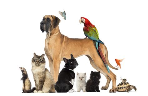 how many do puppies need in the year 6 unconventional pets to consider in your retirement
