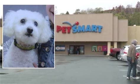 petsmart puppy grooming family mauled to at petsmart grooming salon the dogington post