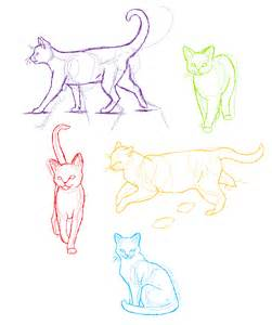 anatomy practice cats by candracar272 on deviantart