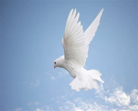 flying with one wing god s grace in our times of adversity books espa 231 o hol 237 stico em busca da paz