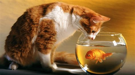 cat and wallpaper cat and fish wallpapers hd wallpapers id 10817