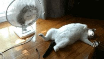 very hot funny gif hot summer gif find share on giphy