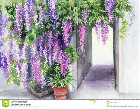 wisteria blossom stock photography image 33217152