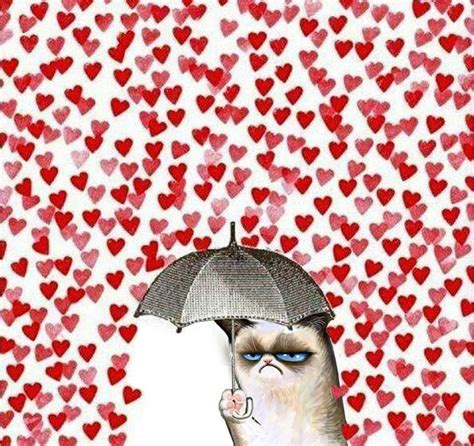 valentines grumpy cat a student s s day and same