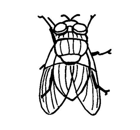 Black Fly Coloring Page Coloringcrew Com Fly Coloring Page