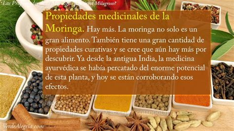 video de la planta de moringa youtube las propiedades de la moringa youtube