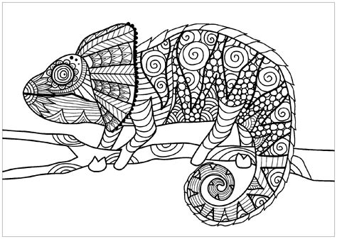 coloring pages for adults chameleon chameleon on branch chameleons and lizards coloring