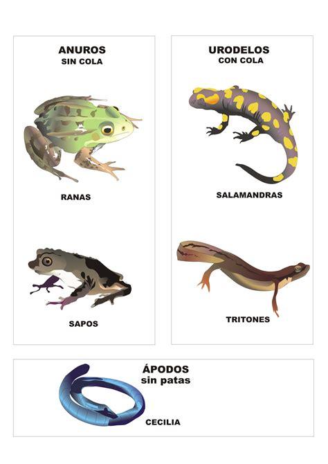 imagenes animales anfibios nombres de anfibios imagui