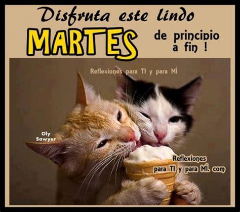 imagenes feliz lunes con gatos lindos gatitos con frases lindas de buenos dias en im 225 genes