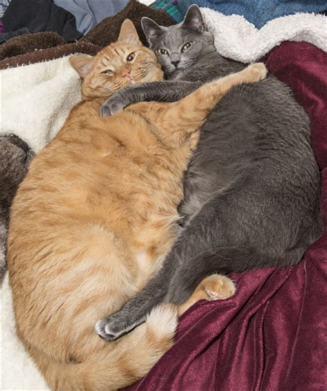 cat hugging adopting two cats cat adoption found animals foundation
