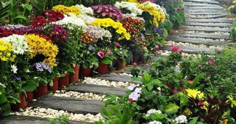 Lu Hias Untuk Rumah putra garden 8 jenis tanaman untuk referensi anda