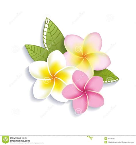 plumeria vector vector plumeria flowers on a white background stock