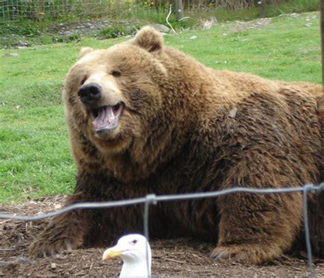 Bears Smile ma gli animali sorridono orsidellaluna