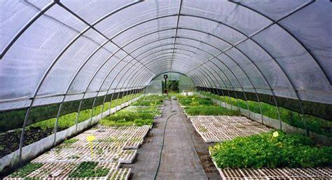 serre per fiori agri ponte serre per orto floricoltura professionali e