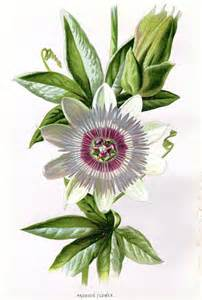 Vintage Flower L by 1887 Antique Botanical Print Flower By