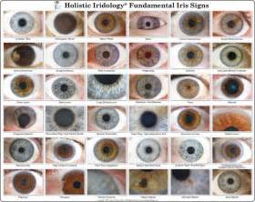 blue eye color chart the 25 best eye color charts ideas on