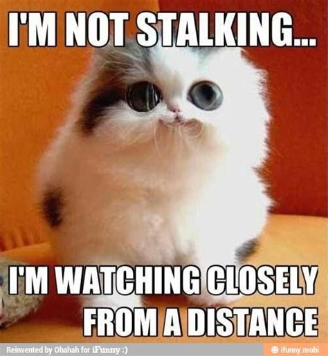 Memes About Stalkers - best 58 stupid stalker images on pinterest humor