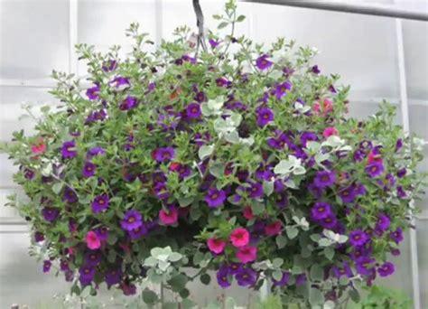 imagenes de jardines verticales caseros jardines verticales con macetas colgantes cuidar de tus