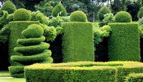 jardines setos imágenes multiplicaci 243 n de setos cuidar de tus plantas es