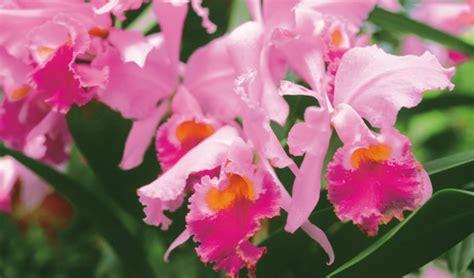 Tanaman Hias Anggrek Tanah 8 macam tanaman hias beserta contoh dan penjelasannya