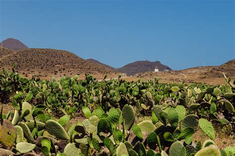 albergue san jose cabo de gata parc naturel de cabo de gata n 237 jar slice of cactus