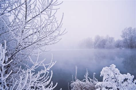 winter images winter fog free stock photo public domain pictures