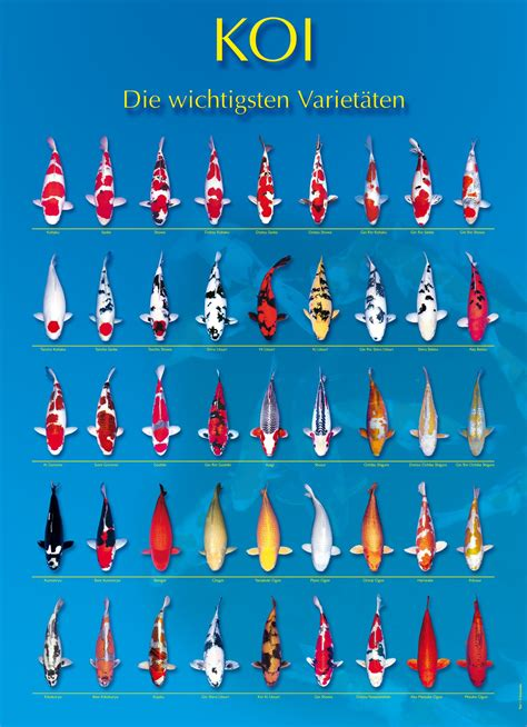koi fish colors koi fish color chart yy19830908 gmail