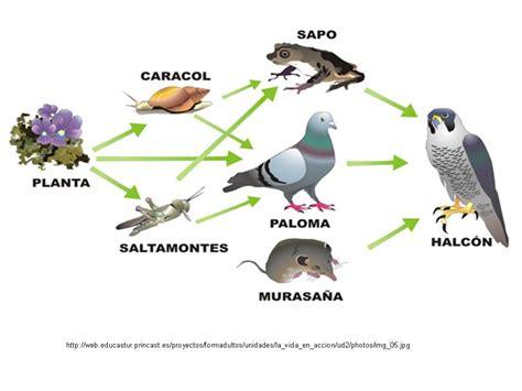 cadenas troficas ejemplos terrestre mi entorno un ecosistema viviente red trofica