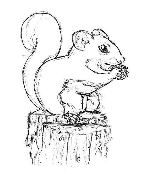 childrens coloring pages of squirrel free printable squirrel coloring pages for kids