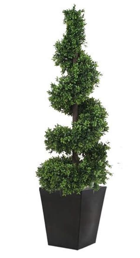outdoor topiary trees wholesale 17 best images about outdoor topiary on