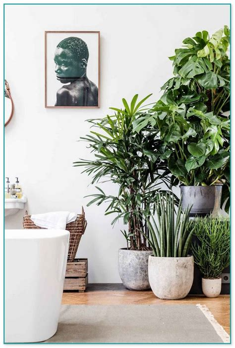 plants that grow in low light house plants that grow in low light