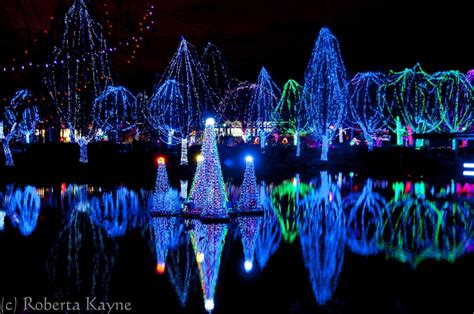 lights at columbus zoo december s season of celebrations wildlights