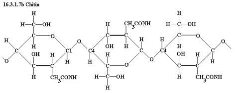 diagram of a polysaccharide chitin structural formula