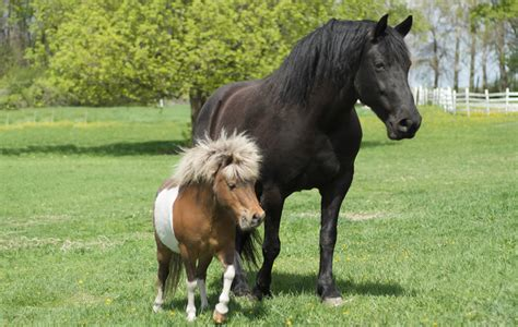 Small Home Breeds Large Small Breeds Picture
