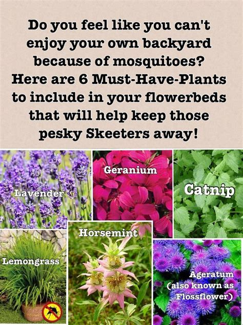 plants to keep mosquitoes away plants to have in your flower beds that will deter