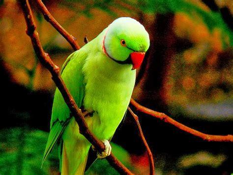 wallpaper of green parrot wallpaperswide9 blogspot com free hd desktop wallpapers
