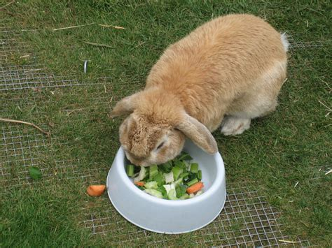 rabbit food a guide on what not to feed your rabbits coops cages coops and cages